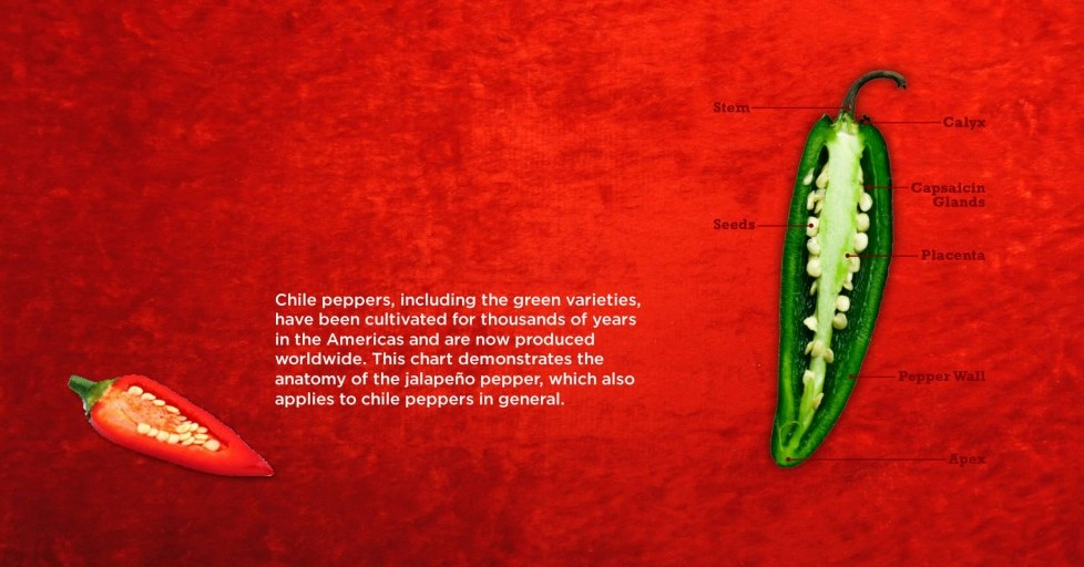 Fact 1: Anatomy of a Chilli