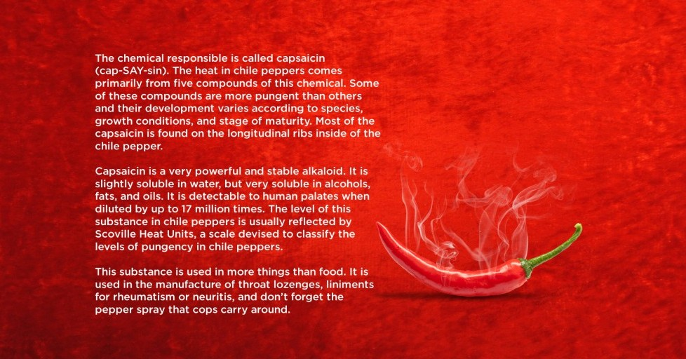 Fact 3: What makes chilli hot?